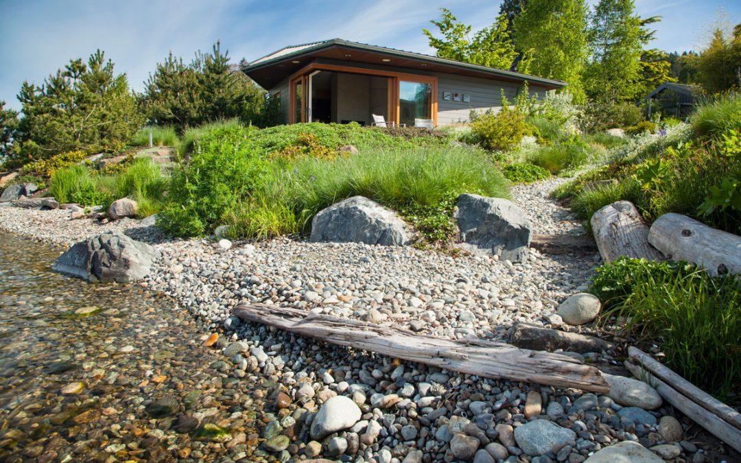 A Living Shoreline in Lake Washington