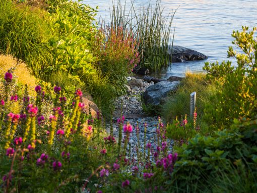 A Shoreline Re-Imagined