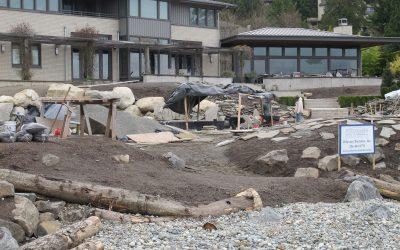A Glimpse of Shoreline Restoration